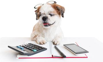 Dog using a calculator
