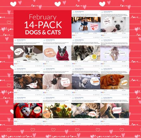 February 14 Pack Dogs and Cats