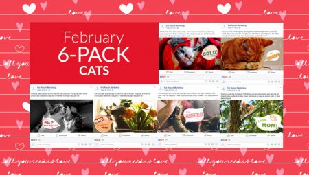 February 6-Pack Cats
