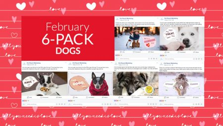 February 6-Pack Dogs