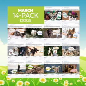 March 2019 14 Pack Dogs