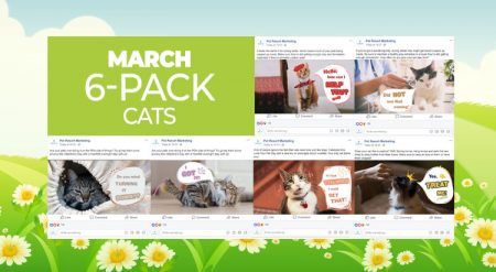 March 2019 6 Pack Cats