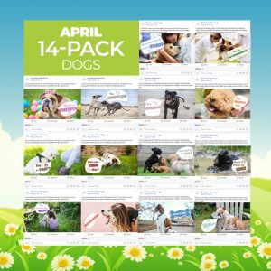 April 14 Pack Dogs