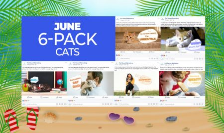 June 6 Pack Cats