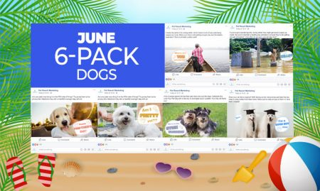 June 6 Pack Dogs
