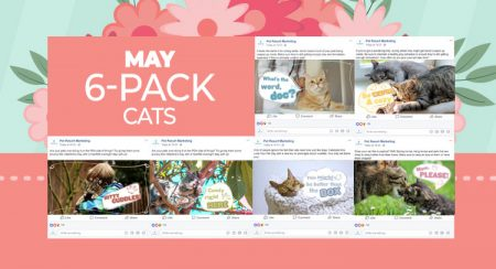 May 6 Pack Cats