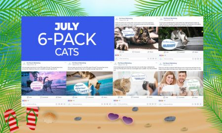 July 6 Pack Cats
