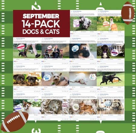September 14 Pack Dogs and Cats