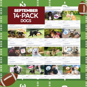 September 14 Pack Dogs