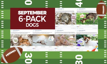 September 6 Pack Cats