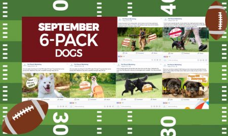 September 6 Pack Dogs
