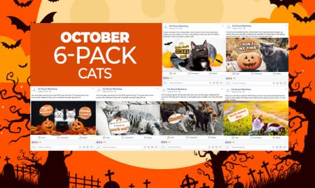 October 6 Pack Cats
