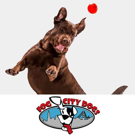 Fog City Dogs Case Study