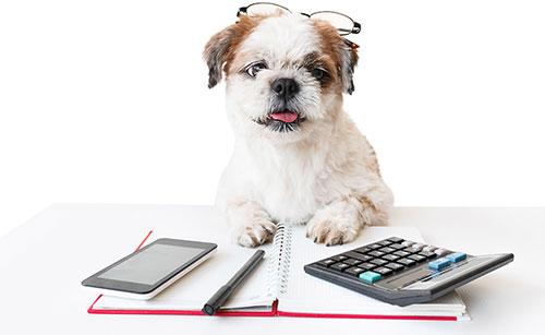 Dog with a calculator