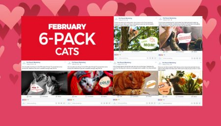 february-6-pack-cats