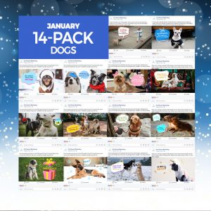 January 14 pack dogs
