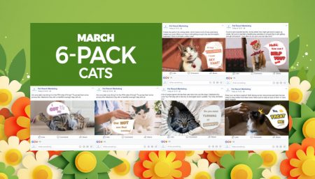 March 2020 Pack Cats